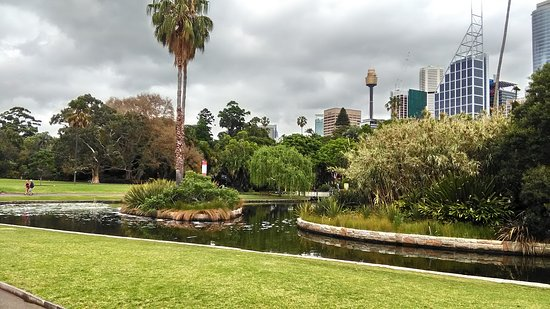 Photo of Botanical Garden Royal Botanic Gardens at Mrs Macquaries Rd, Sydney, Ne 2000, Australia
