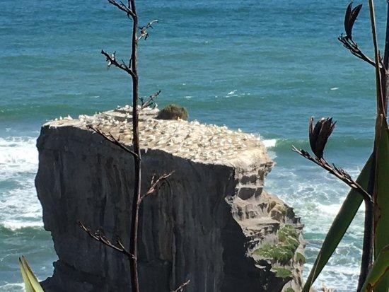 Muriwai Beach 사진