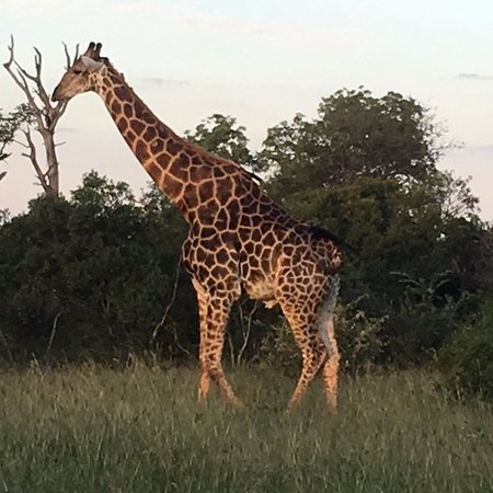 Ngala Private Game Reserve, แอฟริกาใต้: Most incredible creature up close