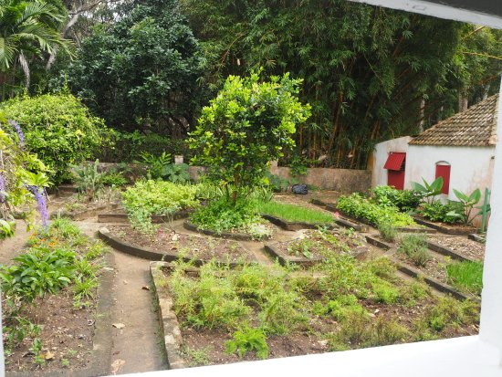 Saint Peter Parish, Barbados: medicine garden