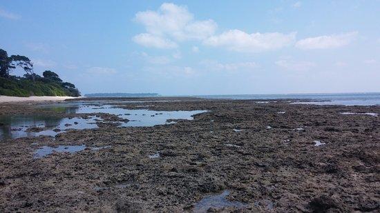 Neil Island, Indien: Beach