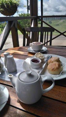 Millaa Millaa, Australie : Morning Tea