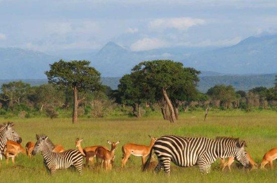 Udaay Safari & Tours (T) Ltd: getlstd_property_photo