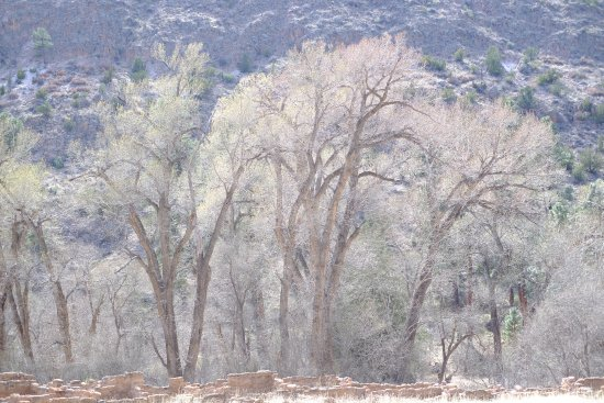 Los Alamos, NM: Early Spring trees along the river/Bandelier