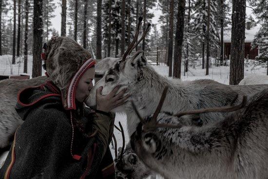Znalezione obrazy dla zapytania reindeer silba jokkmokk