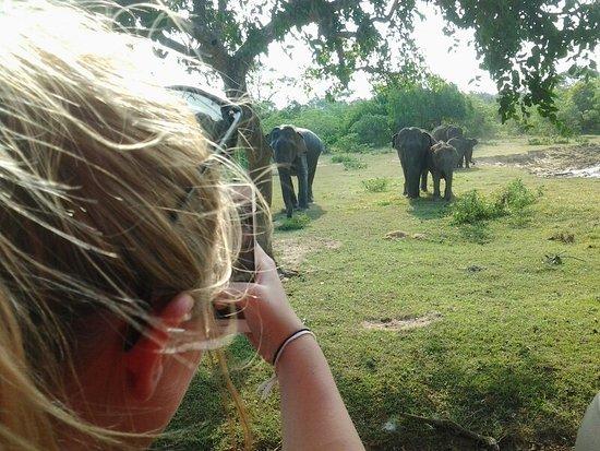 Tangalle, Sri Lanka: Yala National Park