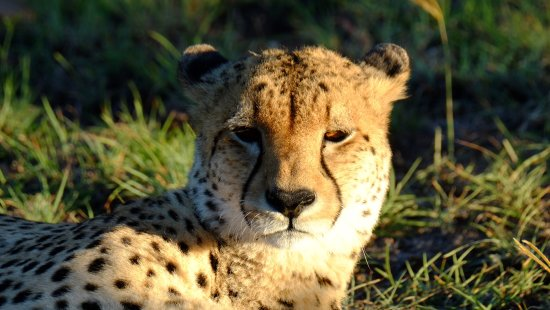 Заповедник Шамвари, Южная Африка: photo4.jpg