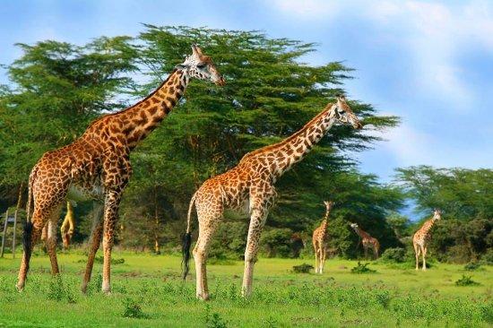 Gazelle Adventures