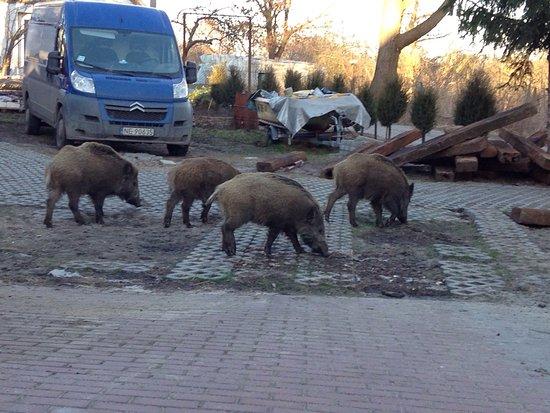 Krynica Morska, Poland: photo4.jpg