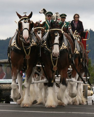 Grants Pass, OR: Clydesdales