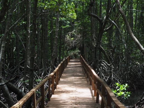 Tunku Abdul Rahman Marine Park: Mangrove rainforest, part of walk from main jetty to Base Camp (3-4 hours return)