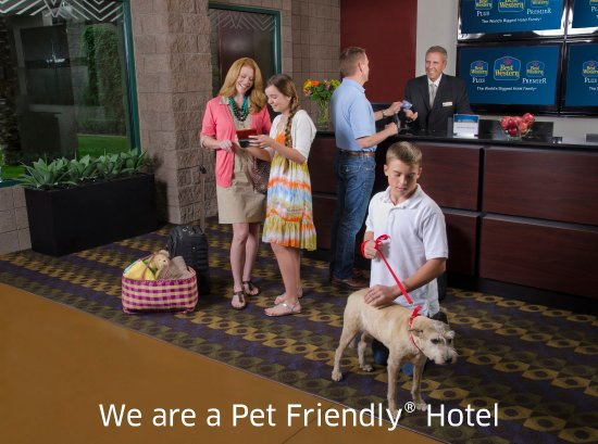 بست ويسترن نيوبورت إن: Pet Friendly Hotel