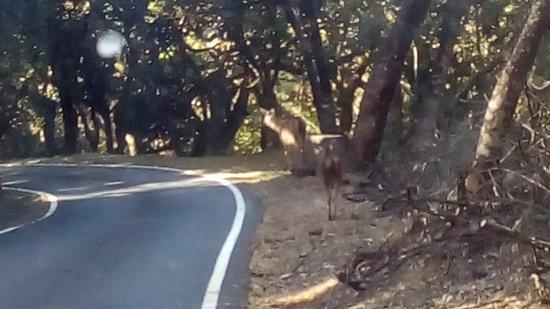 Upper Bhavani Lake: Baby deer on the way to Upper Bhavani