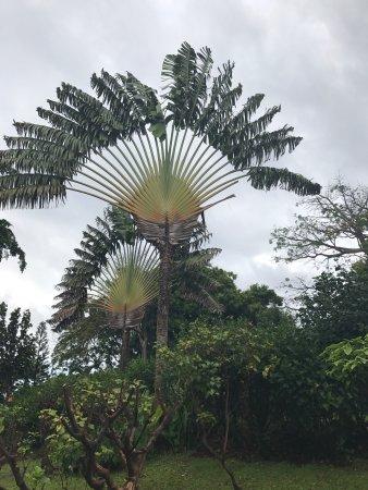 Deshaies, Guadeloupe: photo3.jpg
