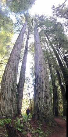 Prairie Creek Redwoods State Park: photo4.jpg