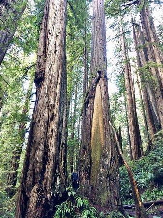 Prairie Creek Redwoods State Park: photo5.jpg
