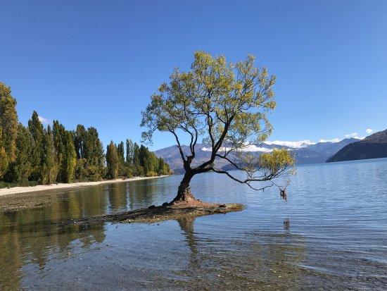 Wanaka, Nouvelle-Zélande : photo0.jpg