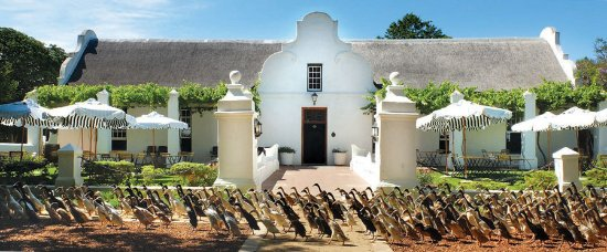 Vergenoegd Low Wine Estate