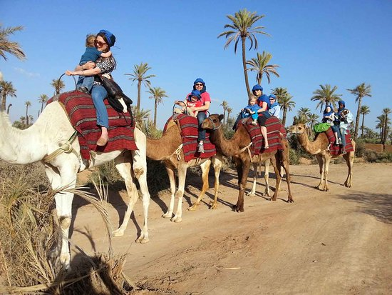 Marrakech Desert Tour: camel ride marrakech