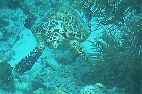 Kralendijk, Bonaire: Taken on our snorkel trip to Klein Bonaire with Woodwind.