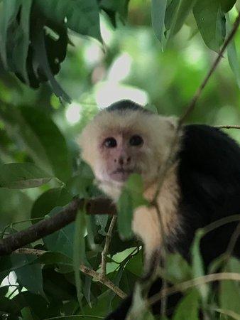 Costa Rica Jade Tours: photo4.jpg