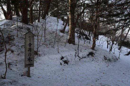 Chitose, Japonia: photo4.jpg
