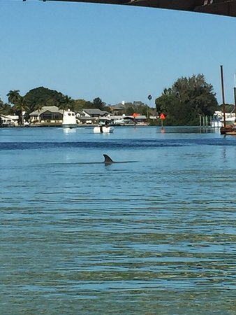 Venice, FL: Dolphins March 20, 2017