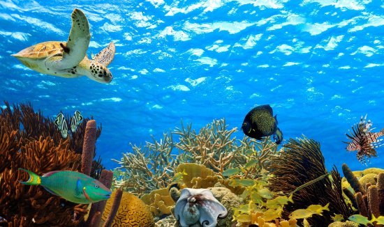 Saint Michael Parish, Barbados: Barbados is home to some of the best diving spots in the world