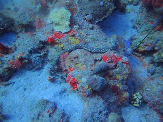 Bouillante, Guadeloupe: Serpentine