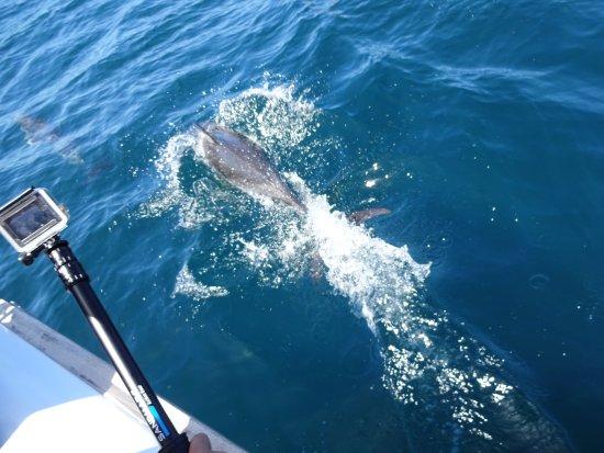 Paihia, New Zealand: Dolphins!