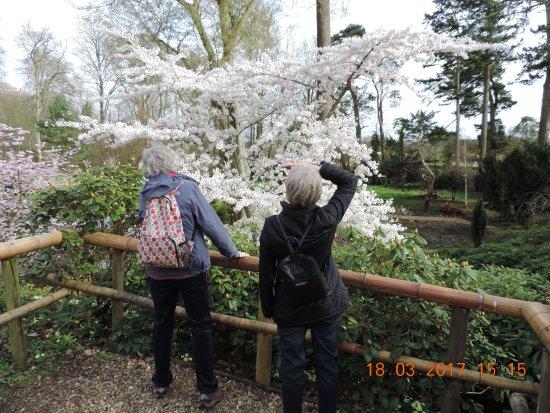 Wimborne Minster, UK: Spring is Sprung!