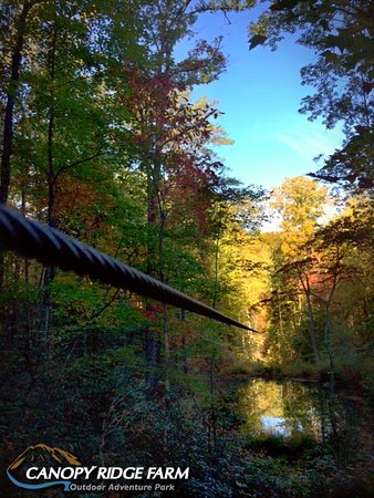 Lake Lure, NC: Canopy Ridge Farm ziplines in the fall colors