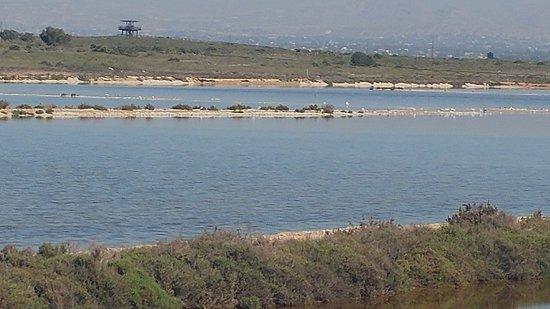 Alicante-provinsen, Spanien: Salinas de Santa Pola