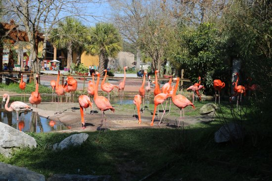 Riverbanks Zoo and Botanical Garden: I think every zoo has flamingos!