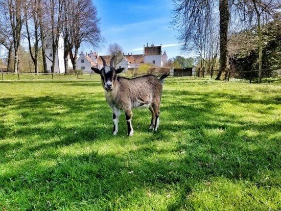 Hoor, Sweden: baby goat on the grounds