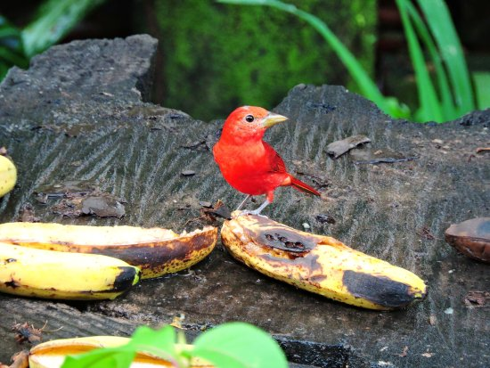 Sarapiqui, Costa Rica: one of the feeding areas