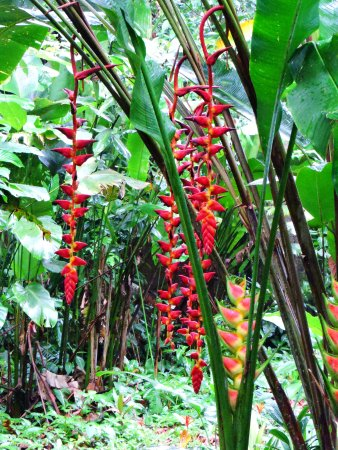 Sarapiqui, Costa Rica: some of the wonderful plants around the grounds