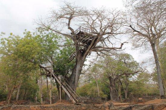 Gede, Kenia: Casa sull' albero