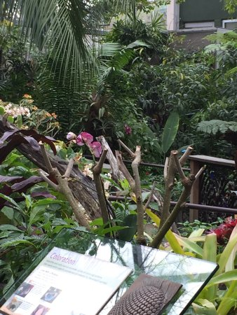 Butterfly Rainforest: photo4.jpg