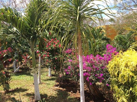 Temozon, Messico: photo3.jpg