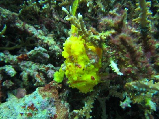 Foto de Magic Island Dive Resort
