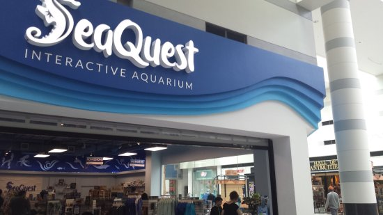 Sea quest gift shop opposite the hall of antiquities for Fish store las vegas