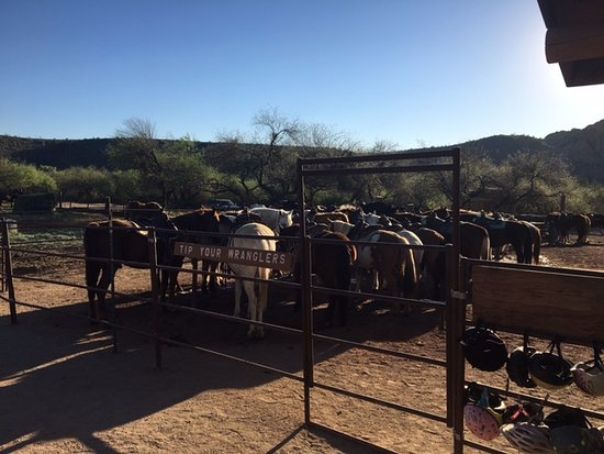‪‪Mesa‬, ‪Arizona‬: Photo of the horses getting ready to go to work.‬