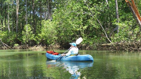 Dominical, Costa Rica: paddling in the mangrove jungle