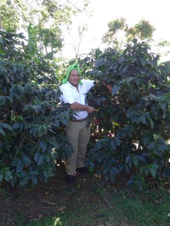 Poas Volcano National Park, Costa Rica: Chauffeur laat ons koffie zien.