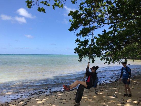 Hauula, Hawaje: Turtles, monk seal, and amazing views!
