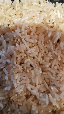 "New Iberia, LA: Bugs in the ""Pecan"" rice"