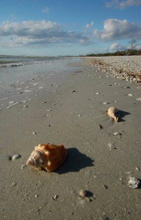 Beaufort, NC: Clean Beaches and Big Shells