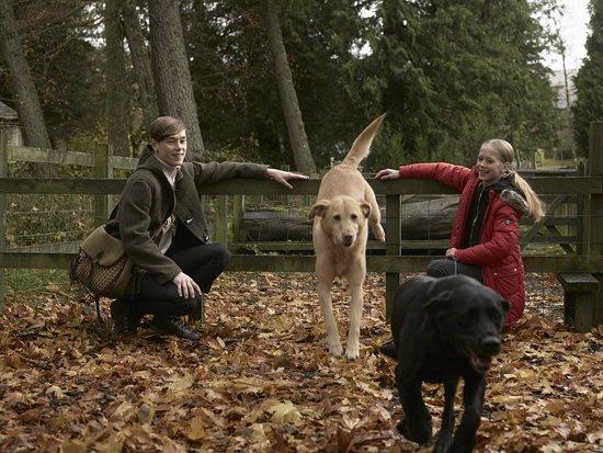 Auchterarder, UK: Family Gundog Lesson