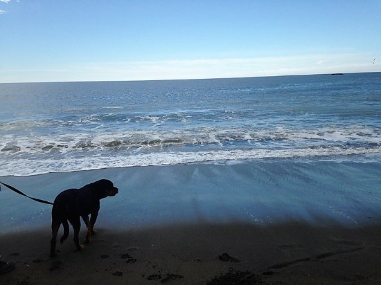 Muir Beach, Kalifornia: My pooch.